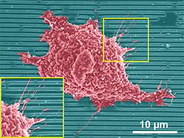Nanoscale stuctures applied to regular cell behavior